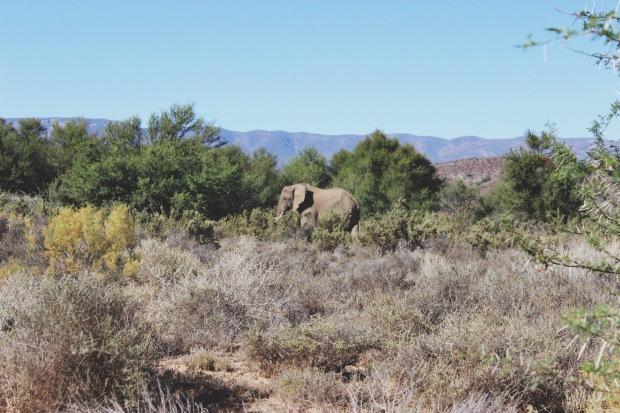 Endlich Elefanten <3